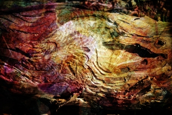 fallen-tree-fossil-collage